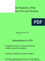 General Anatomy of the Autonomic Nervous System