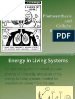 Photosynthesis and Cellular Respiration PowerPoint Presentation Edited Alison 1119