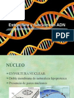 Replicacion del Dna