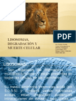 Lisossomas Degradacion y Muerte Celular6