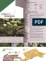 Catalogo Hongos
