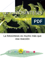 Clases Fotosintesis