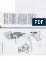 Anatómia I. - Könyv -138