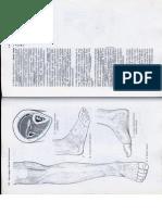 Anatómia I. - Könyv -137