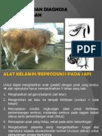 2 Fisiologi Diagnosa Kebuntingan