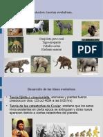 evolución, curso biología 2015