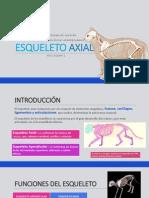Esqueleto Axial Flino