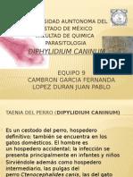 Diphylidium caninum