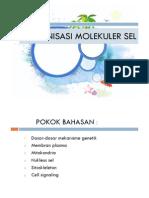 3. Organisasi Molekuler Sel