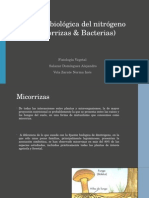 Fijación Biológica Del Nitrógeno F.V