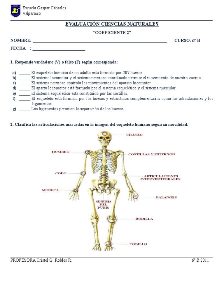 Prueba Nº 2 Sistema Esqueletico