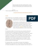 Mitos Do Cerebro