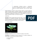 Eudicotiledoneas Clado Rosidas II