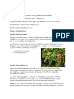 Eudicotiledoneas Clado Rosidas (1)