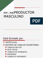 Histo AP .Reproductor Masculino