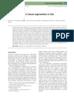 Stem Cell System in Tissue Regeneration in Fish
