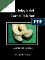 Print2MorfologiaCordalInferior