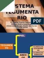 220270666 Sistema Tegumentario Usmp 2014