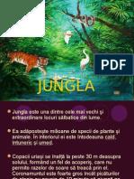 prezentare jungla