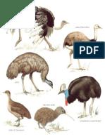 Longman - Enciclopedia Ilustrada De Aves.pdf