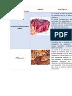 Biología celulas