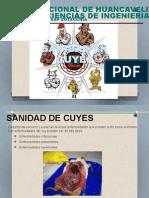 Exposicion de Cuyes