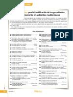Clave dicotómica hongos.pdf
