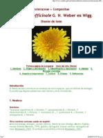 Taraxacum Officinale - Ficha Informativa