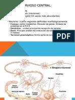 Neuronas y Glía Embriologia SNC