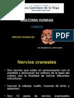 (Clase 7) Nervios Craneales