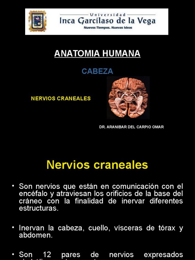 Clase 7) Nervios Craneales