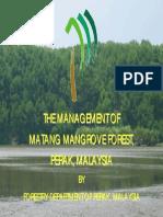 20 Matang Management