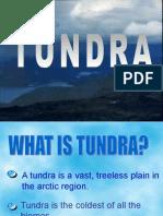 tundra-biome.ppt