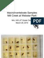 Mrs. Hill's Class - Macroinvertebrate Samples 3/29/2010