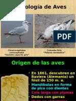 Morfología Aves1.pptx