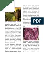 Wine Article 1