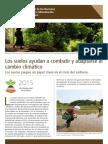 Los suelos ayudan a combatir y a adaptarse al cambio climatico