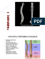 17 Columna Vert. y Triangulos Del Cuello