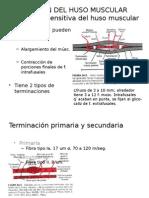 FUNCIÓN DEL HUSO MUSCULAR.pptx