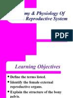 anatomyphysiologyoffemalereproductivesystem-130506124715-phpapp02