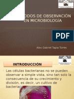 metodos de observacion en microbiologia
