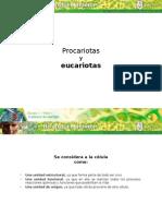 b1 m1 Procariotas Eucaroitas