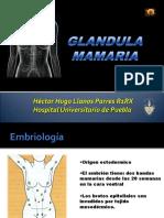 Gland Mamaria