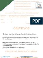 torax posterior