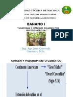 Importancia del cultivo de Banano en el Ecuador