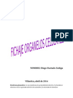 Fichaje Organelos Celulares Diego Hurtado