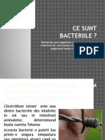 Ce Sunt Bacteriile