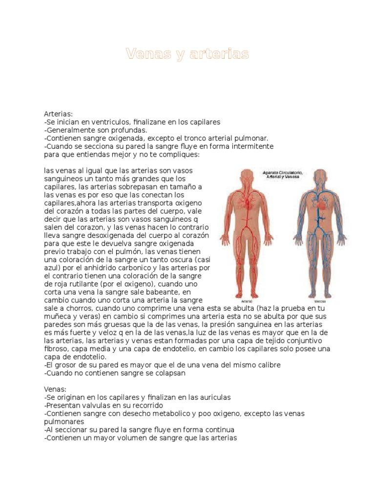 Venas y arterias.docx