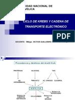 Bioquimica f. Ciclo de Krebs