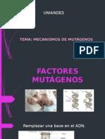 FACTORES MUTÁGENOS